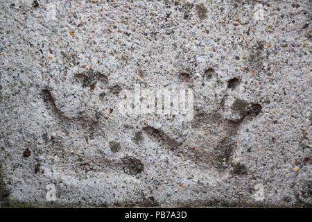 Empreintes d'un enfant, coulé dans le béton pour toujours Banque D'Images