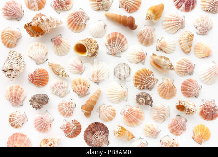Variété de coquillages sur fond blanc. Banque D'Images