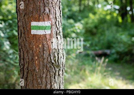 Un signe peint sur un arbre dans la forêt. Le marquage de la route touristique. Saison de l'été. Banque D'Images
