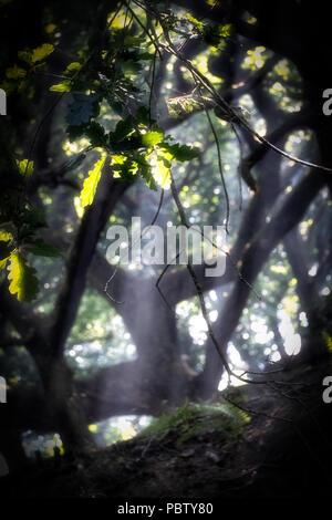 Les images prises à l'atmosphère forte notion contre un soleil fort filtrant à travers les arbres avec des rayons du soleil les arbres et les terres boisées de l'éclairage Banque D'Images