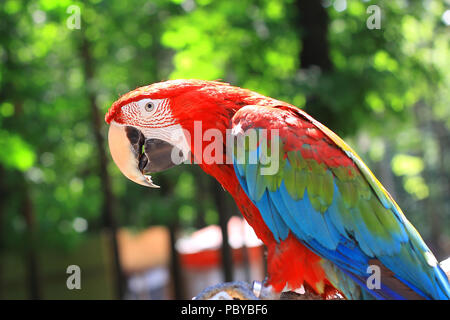 Close up. parrot macaw sitting on a branch Banque D'Images
