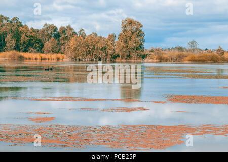 Magnifique réserve naturelle sur la rivière Murray à Riverland, Banrock Station, South Australia Banque D'Images