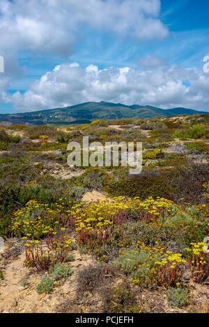 Duna Da Cresmina, dunes de sable, Cascais, Lisbonne, Portugal, une partie de l'Guincho-Cresmina système dunaire.
