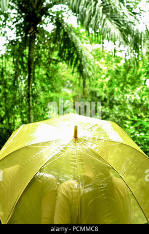 La ville de Panama, Panama, Panama. 16 mai, 2009. S'éveiller à un chœur de tropical, les toucans, les motmots et fruitcrows. Votre chambre est au niveau de la cime, pas plus de 40 pieds de l'oiseaux. Dans la fraîcheur de l'aube panaméennes, vous pouvez sentir le Panama?'S grand éveil rainforest autour de vous. Shrike-Vireos Cotingas bleu et vert, normalement les oiseaux élevés en entrevu la cime des arbres, la perche devant votre Canopy Tour suite.En haut d'un escalier dans la salle à manger, une tasse de café et pains vous attendent. S'installer à une table près de la fenêtre. Au-dessus de la forêt tropicale sans fin d'Soberani?un parc national, un navire Banque D'Images