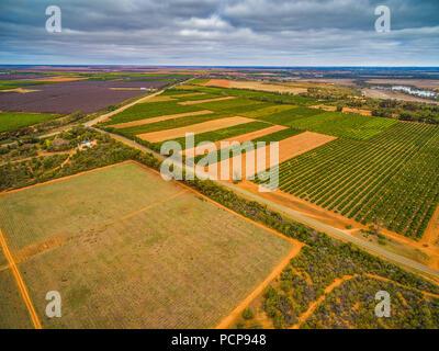 Vue aérienne de champs agricoles dans Murtho, Riverland, Australie Banque D'Images