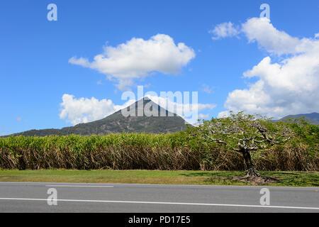 Dans la production de canne à sucre avant de Walsh, pyramide Gordonvale, Far North Queensland, Queensland, Australie, FNQ Banque D'Images