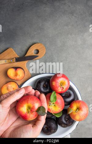 Caucasian woman tient en mains vivid red apple mûrs avec tige vert feuilles prunes sombres sur la plaque d'émail blanc. Planche à découper en bois sur pierre noire backg Banque D'Images