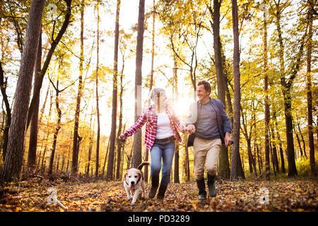 Couple avec chien en promenade dans une forêt d'automne. Banque D'Images