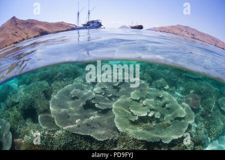 Une belle mais fragile coral reef pousse dans les eaux peu profondes du Parc National de Komodo, en Indonésie. Cette région est connue pour ses dragons et les récifs coralliens. Banque D'Images