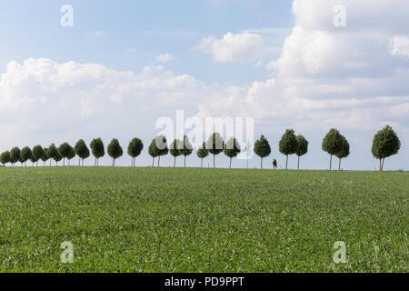 Scène minimaliste d'un couple marchant dans l'allée d'arbres Banque D'Images