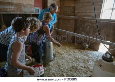 Les grands-parents et petits-fils nourrir poulets dans barn Banque D'Images