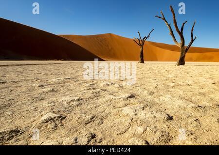 Deadvlei est un pan de l'argile blanche situé près de la plus célèbre marais salant de Sossusvlei, l'intérieur de la parc de Namib Naukluft en Namibie. Aussi écrit DeadVlei ou Banque D'Images