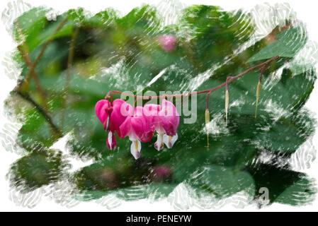 Fleurs en forme de coeur accroché à la branche d'un Bush - fleurs de jardin en été - Châssis de conception d'aquarelle Banque D'Images