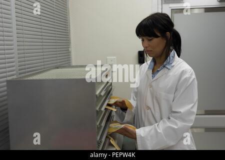 Technicien de laboratoire en plaçant les poches de plasma au cabinet Banque D'Images