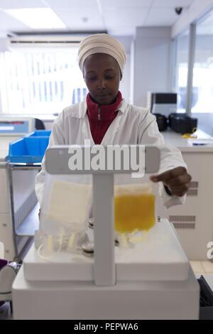 Technicien de laboratoire contrôle de poids de poches de plasma Banque D'Images