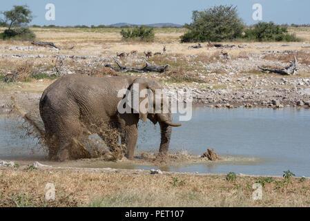 Grand éléphant à jouer avec de l'eau point d'eau et de refroidissement de la chaleur Banque D'Images