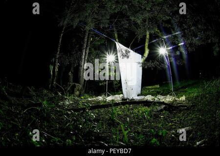 02e14aa5e Luz con fotos para atraer insectos como palomillas hacia una tela blanca en  el bosque en ...
