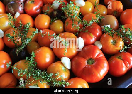 Prêt pour les tomates rôti aux herbes, l'ail et le vinaigre balsamique, selective focus Banque D'Images