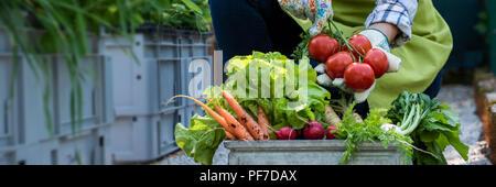 Méconnaissable female farmer holding caisse pleine de légumes fraîchement cueillis dans son jardin. Homegrown bio produit concept. Ferme durable concept ba Banque D'Images