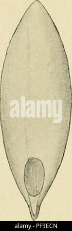 . Deutsche Südpolar-Expedition, 1901-1903, im Auftrage des Reichsamtes des Innern. Gauss (navire); des expéditions scientifiques. . Veuillez noter que ces images sont extraites de la page numérisée des images qui peuvent avoir été retouchées numériquement pour plus de lisibilité - coloration et l'aspect de ces illustrations ne peut pas parfaitement ressembler à l'œuvre originale.. Deutsche Südpolar-Expedition (1901-1903), Erich von Drygalski, 1865-1949. Berlin, G. Reimer