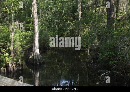 Swamp à première Landing State Park, États-Unis Banque D'Images