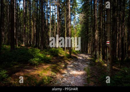 Sentier de randonnée pédestre marque signe peint sur un arbre. Chemin menant à travers la belle forêt de Bohême, parc national. Concept Trekking arrière-plan. Banque D'Images