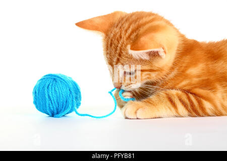 Le gingembre mackerel tabby kitten isolé sur un fond blanc jouant avec une balle de laine bleu