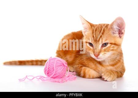 Le gingembre mackerel tabby kitten isolé sur un fond blanc jouant avec une balle de laine rose