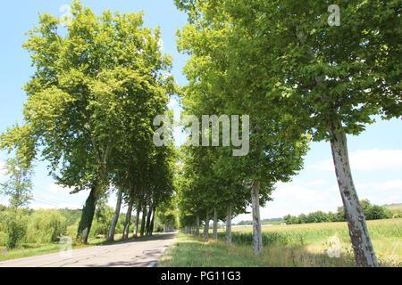 Plaine de l'avenue d'arbres en France, sur la route principale Banque D'Images