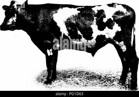ed9e5bb45a1e1 La production de viande bovine . Les bovins. 2S PRODUCTION DE VIANDE  BOVINE, .