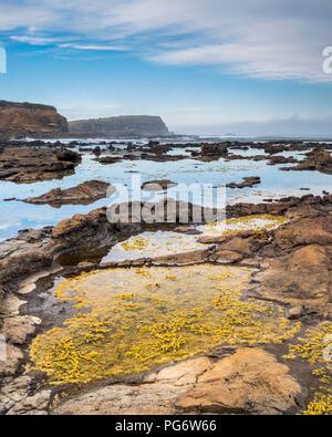 Nouvelle Zélande, île du Sud, le sud de l'itinéraire touristique, Orepuki, Curio Bay Banque D'Images