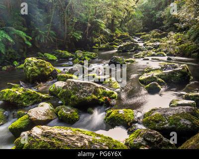 Nouvelle Zélande, île du Sud, rivière à Tautuku Parc Forestier de Catlins Banque D'Images