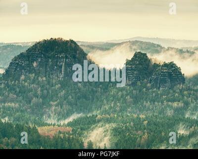 Paysage d'automne avec la forêt brumeuse, vert feuilles et aiguilles à nuageux lever du soleil. Misty fée forêt en automne. Banque D'Images