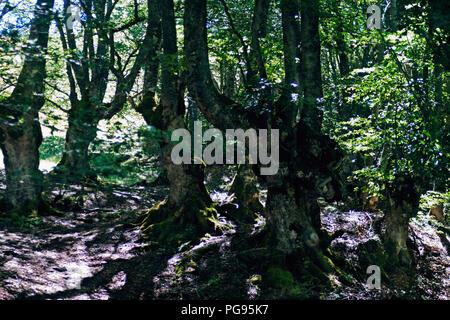 Vue magique d'un paysage forestier .Soft rayons de soleil traverser le feuillage vert-jaune,couleurs éclatantes ,, grand angle , rétro-éclairage contraste élevé Banque D'Images