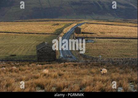 Un agriculteur sur un troupeaux de moutons en quad le long Buttertubs passent, Swaledale, Yorkshire Dales National Park. L'hiver en Angleterre Banque D'Images