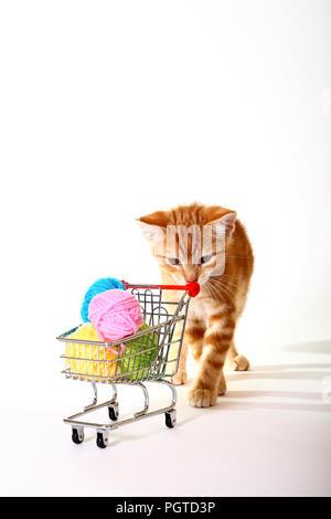 Le gingembre mackerel tabby chat jouant avec de la laine de balles dans un panier