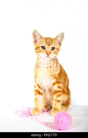 Le gingembre mackerel tabby kitten playing avec une balle de laine rose