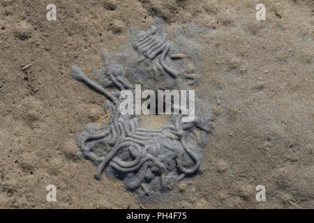 Sandworm Lugworm européenne, (Arenicola marina). Dépressions caractéristique à la tête (le coup trou) et une distribution de défection des sédiments à l'extrémité de la queue, la mer des Wadden ALLEMAGNE