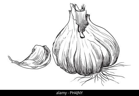 Légumes à la main avec de l'ail en tranches . Vector illustration monochrome isolé sur fond blanc. Banque D'Images