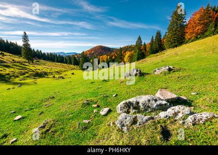 Belle matinée en montagne. une forêt mixte en couleurs d'automne sur la colline. Roches sur un pré herbeux Banque D'Images