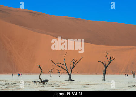 Camelthorn arbres morts (Acacia erioloba) de dunes de sable, de Dead Vlei, Sossusvlei, Désert du Namib, le Namib Naukluft National Park Banque D'Images