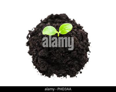 Petite plante verte pousse la croissance des feuilles au sol de terre heap Banque D'Images