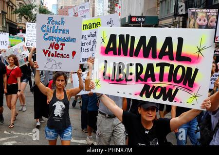New York, NY, USA. 1er septembre 2018. Les défenseurs des droits des animaux tenir les affiches aux droits des animaux officiel Mars NYC. Banque D'Images
