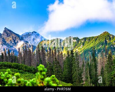 Polish Tatra, paysage d'été avec ciel bleu et nuages blancs. Banque D'Images