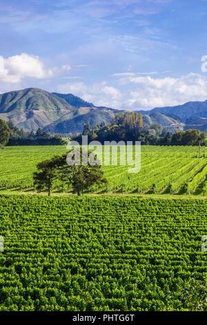 Hectares (ha) de vignes dans la région de Marlborough sur l'île du Sud, Nouvelle-Zélande. Banque D'Images