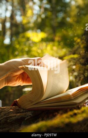 Vieux livre de magie des lumières dans la forêt de conte, magie mystique sur fond de lumière vive Banque D'Images