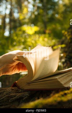 Vieux livre de magie des lumières dans la forêt féerique Banque D'Images