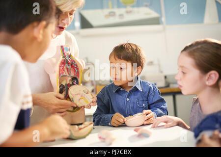 L'enseignant et les étudiants à la recherche à la pièce modèle anatomique dans science center Banque D'Images