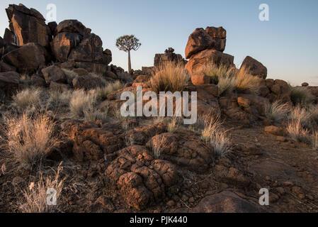 Dans le carquois Quiver Tree tree forest / 'aire de jeu géant' près de Keetmanshoop, la Namibie du Sud Banque D'Images