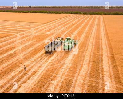 Une journée d'été dans le domaine. La récolte des céréales. La moissonneuse-batteuse décharge le grain récolté dans le corps du chariot. Vue aérienne Banque D'Images